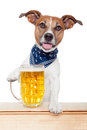 Drunk dog with beer Royalty Free Stock Photography