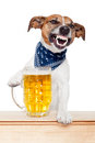 Drunk dog with beer Stock Photos