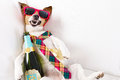 Drunk hangover dog Royalty Free Stock Photo