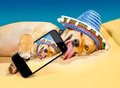 Drunk mexican dog Royalty Free Stock Photo