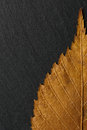 Dry Autumn Leaf On  Background...