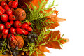 Dry autumn plants and fruits arrangement isolated Stock Photo