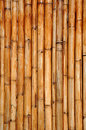 Dry bamboo sticks Royalty Free Stock Image