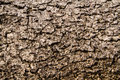 Dry bark texture close up Royalty Free Stock Photo