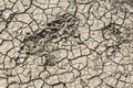 Dry Barren Cracked Soil With Animal Tracks Royalty Free Stock Photo