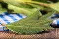 Dry bay leaf Royalty Free Stock Photo
