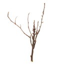 Dry branches isolated on white Royalty Free Stock Photos