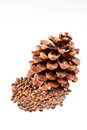 Dry brown Pine cone with nuts Royalty Free Stock Photos