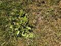 Spálený mrtvý tráva na tvrdý přírodní