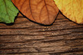 Dry butterfly tree leaf background Royalty Free Stock Photo
