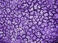 Dry clay background colorized to purple color Royalty Free Stock Images