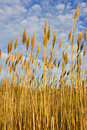Dry coastal grass in winter Stock Photo