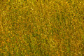 Dry colorful summer grass close up Stock Photo