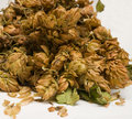 Dry cones of hop Stock Image