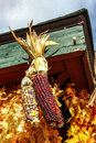 Dry corn decoration with sky behind Stock Photos