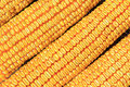 Dry corn detail close up of Stock Photography