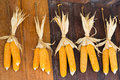 Dry corn hang on old wooden wall in barn Royalty Free Stock Photos