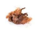 Dry corn silk stigmata maydis on a white background Royalty Free Stock Photography