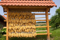 Dry corn in slovenia the sentral part of Royalty Free Stock Photography