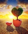 Dry country with cracked soil and tree in the shape of heart growing from the egg at sunset. Royalty Free Stock Photo