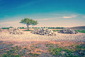 Dry countryside landscape with a green tree high resolution photo in best quality Royalty Free Stock Photography