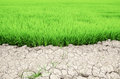 Dry crack earth at rice field Royalty Free Stock Photo