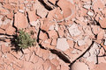 Dry cracked desert ground with plant Royalty Free Stock Photo