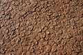 Dry cracked dirt surface Royalty Free Stock Image