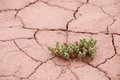 Dry cracked earth with succulent plant Stock Photo
