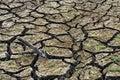 Dry cracked soil Royalty Free Stock Photo