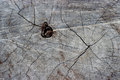 Dry cracked wood background texture pattern. Royalty Free Stock Photo