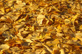 Dry and dead autumn leaves lying on the ground close up Stock Photos