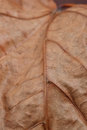 Dry dead leaf close up Stock Image