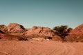 Dry desert and tree sinai egypt Royalty Free Stock Photo