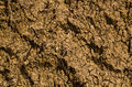 Dry earth ground mix with tree roots Stock Photography
