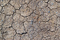 Dry earth texture Stock Image