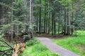 Dry fallen tree near the path Royalty Free Stock Photo