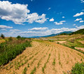 Dry farm field Stock Photography