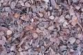 Dry Frozen Leaves