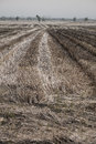 Dry grange in the season of drought photo Royalty Free Stock Photography