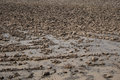 Dry grange in the season of drought photo Royalty Free Stock Image