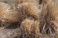 Dry grass Royalty Free Stock Photo