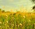 Dry grass against sky background Royalty Free Stock Images