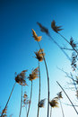 Dry grass. blue sky. dream Royalty Free Stock Photo