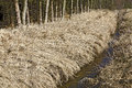 Dry grass on a ditch bank near the forest in winter Stock Photography