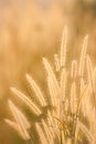 Dry grass field Royalty Free Stock Photo