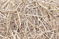 Dry grass or hay texture Royalty Free Stock Photo