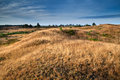Dry grass on hills in morning sunlight drents friese wold netherlands Royalty Free Stock Photo
