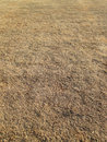 Dry grass land Royalty Free Stock Photo