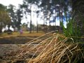 Dry grass in the rural forest park on spring time Royalty Free Stock Photo
